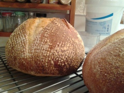 My sourdough babies.